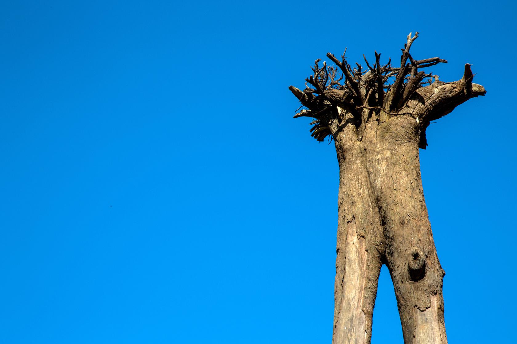 Intervenção urbana Árvores Caídas de Eduardo Srur com produção da Attack Intervenções Urbanas.