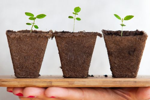 A hand holding 3 seedlings representing the category of new features