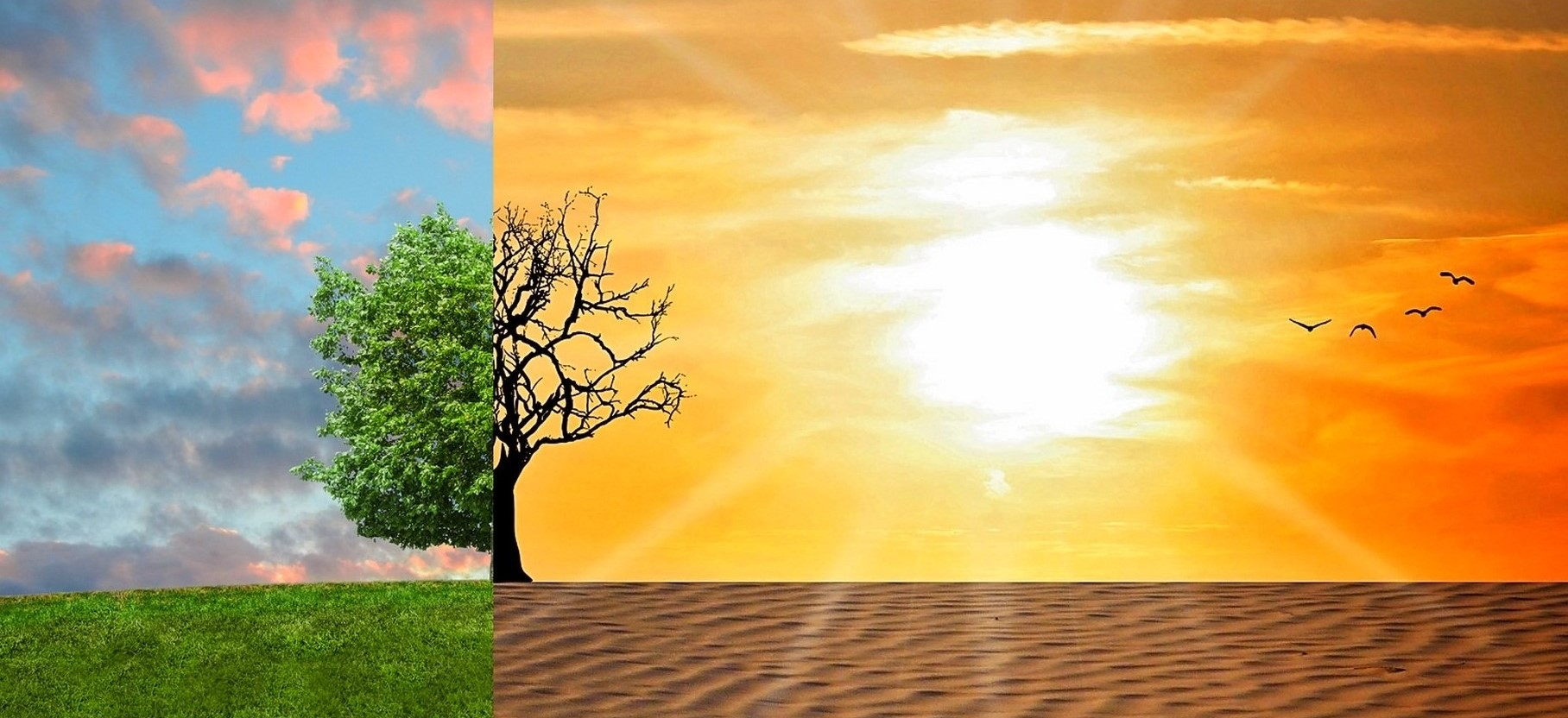 climate change impact shown on a tree with the left side normal and the right side without leaves and in the desert
