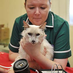 Abbey Vets. Nurse with cat