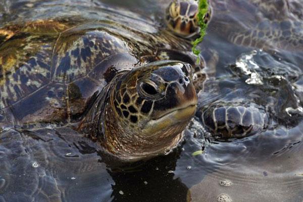 turtle sanctuary zanzibar