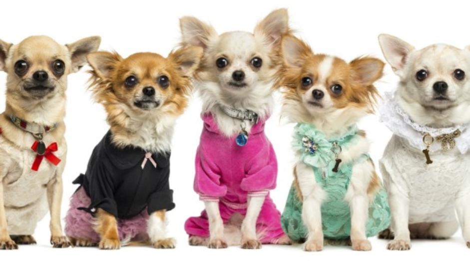 a884b1910 Vira e mexe eu recebo pedido de dicas para Pet Shops. Fui pesquisar e  entendi o porquê. No Brasil, há mais de 70 milhões de cachorros e gatos.