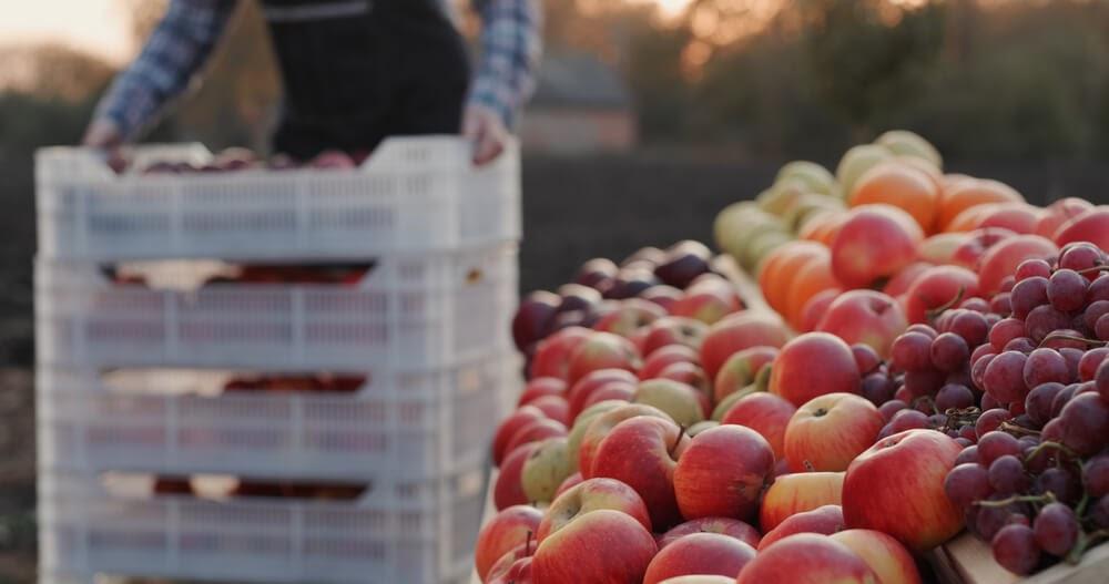 Como montar um hortifrúti e vender frutas e verduras
