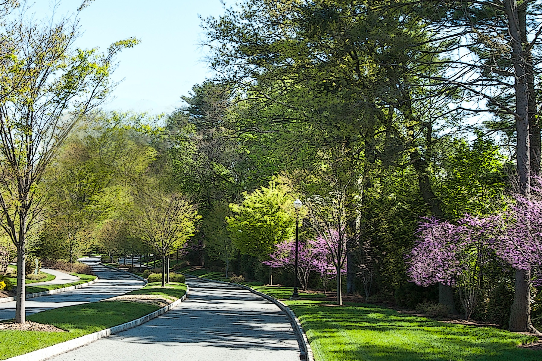 Nature lined road to Haverford Reserve