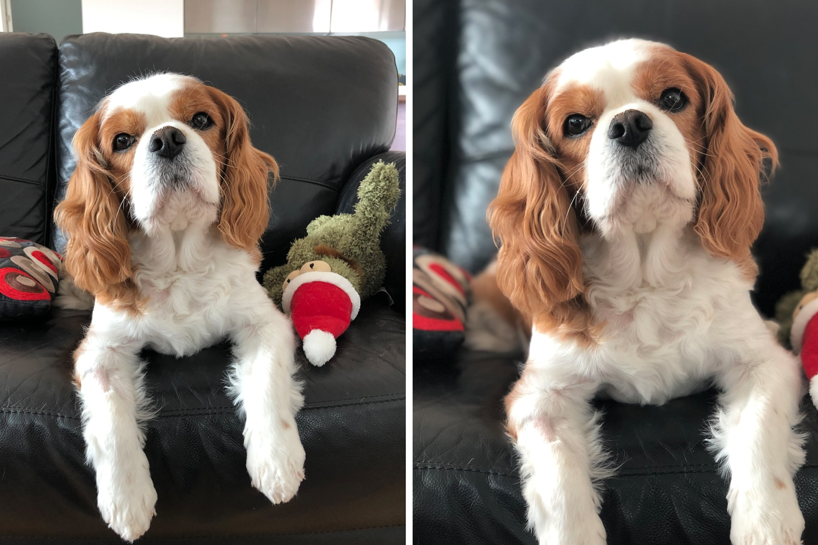 comparative image of two dog photos