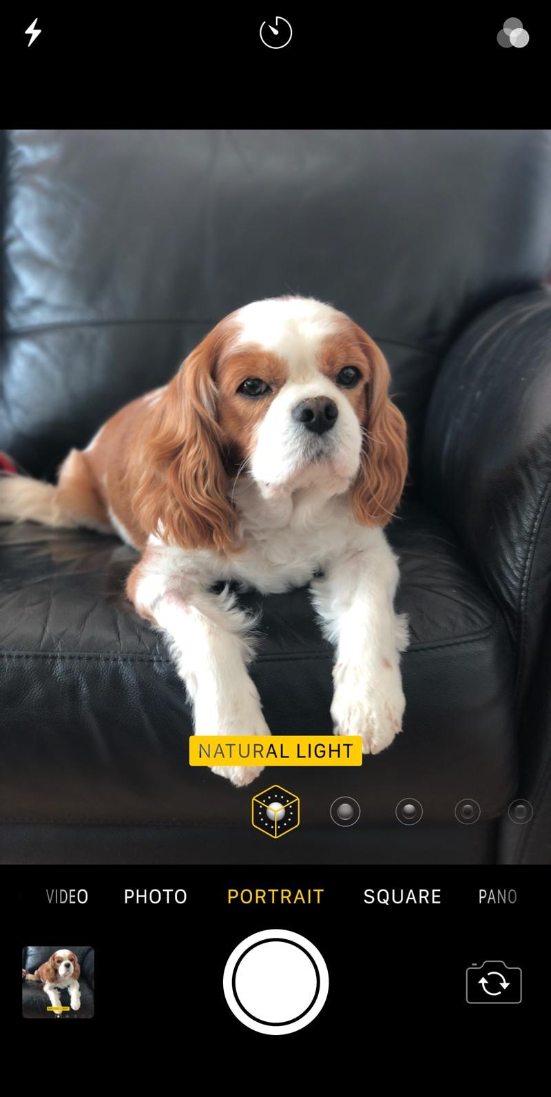 screenshot of iPhone showing a dog