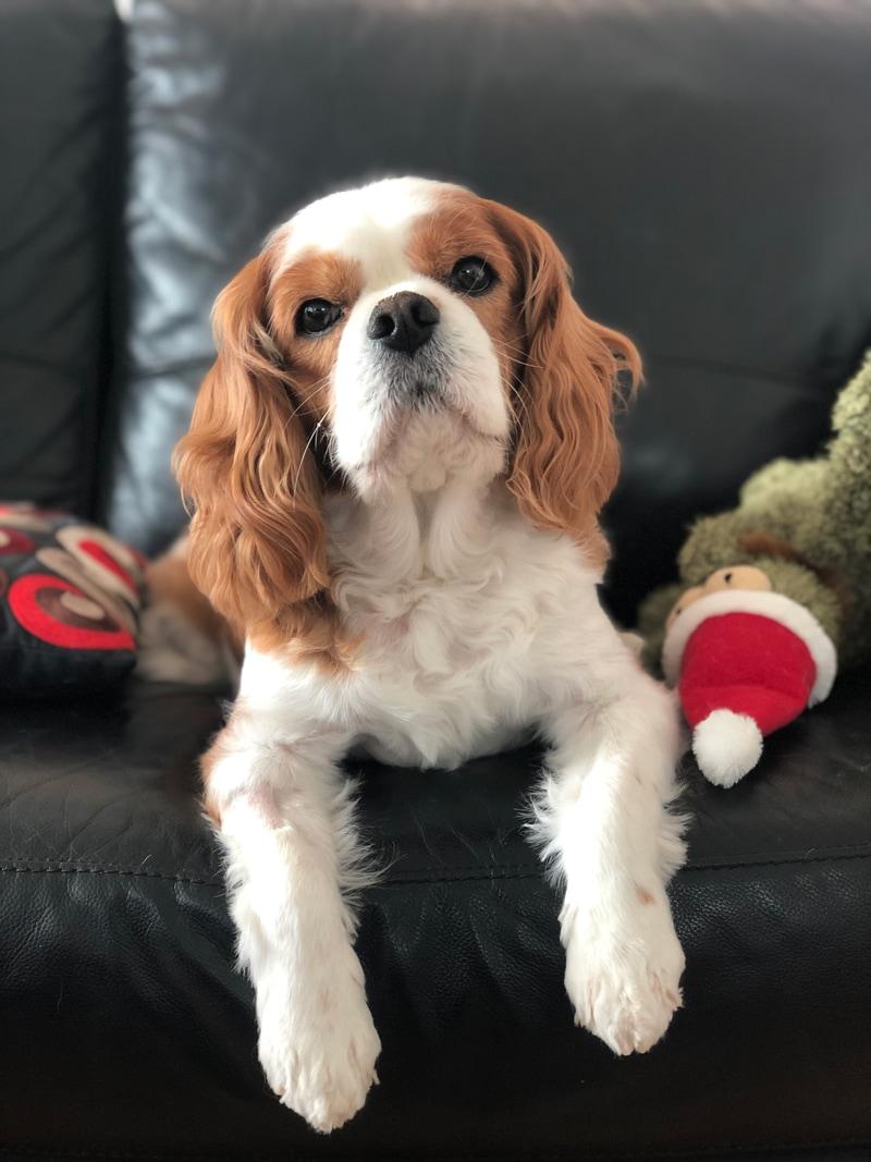 Dog sitting up for photo