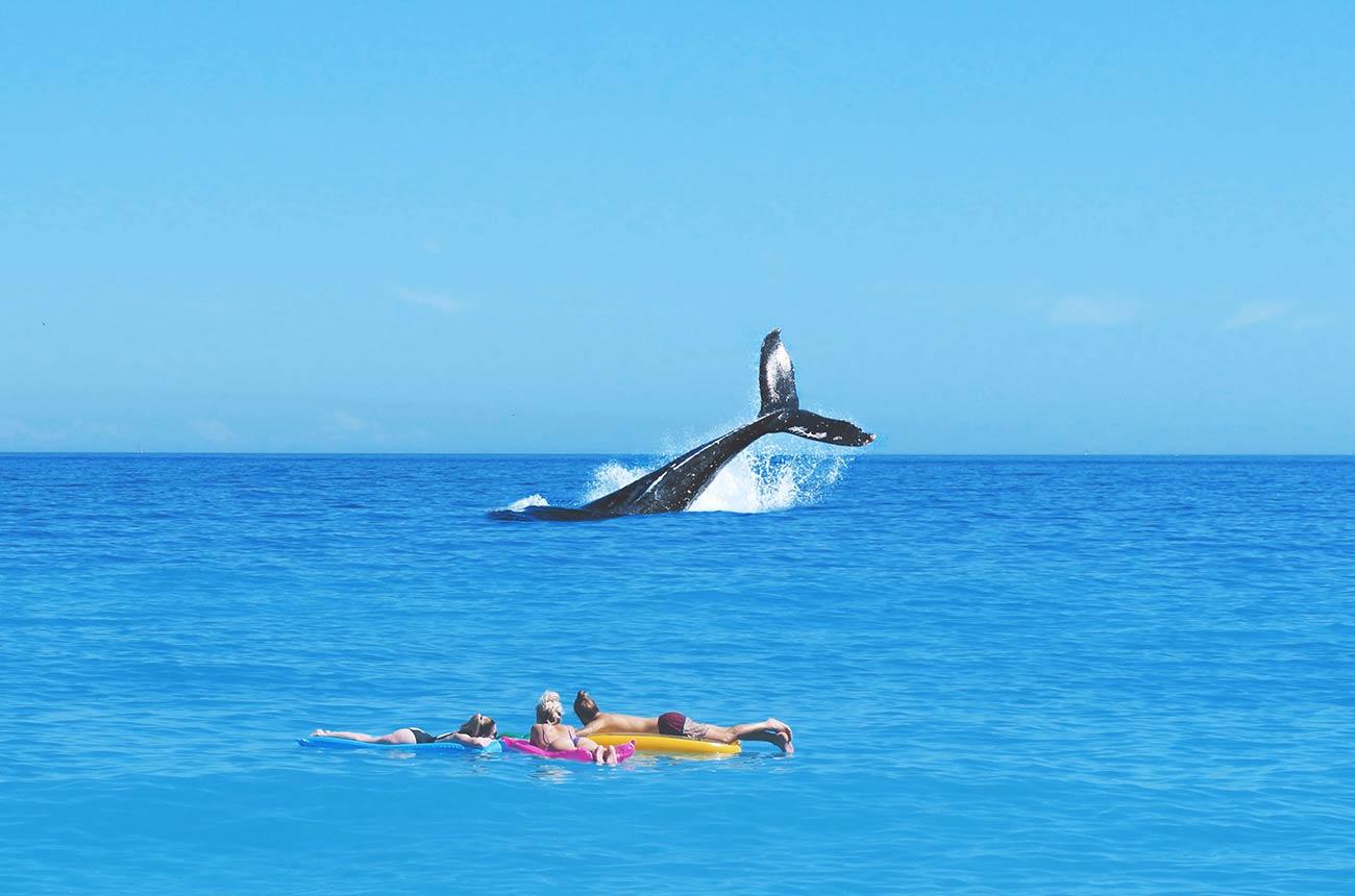 Ein Blauwal bindet das CO2 von ungefähr 1.000 Bäumen.