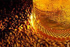 Les 4 ingrédients indispensable de la bière