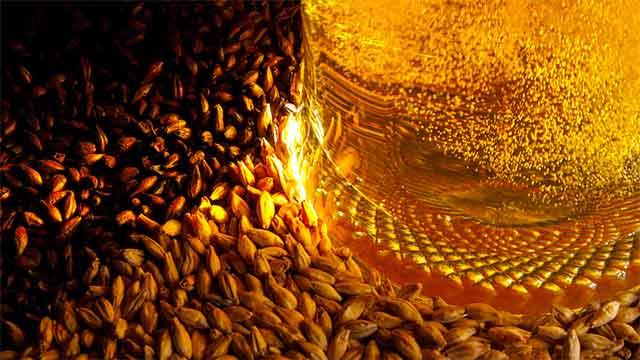 Les 4 ingrédients indispensables de la bière