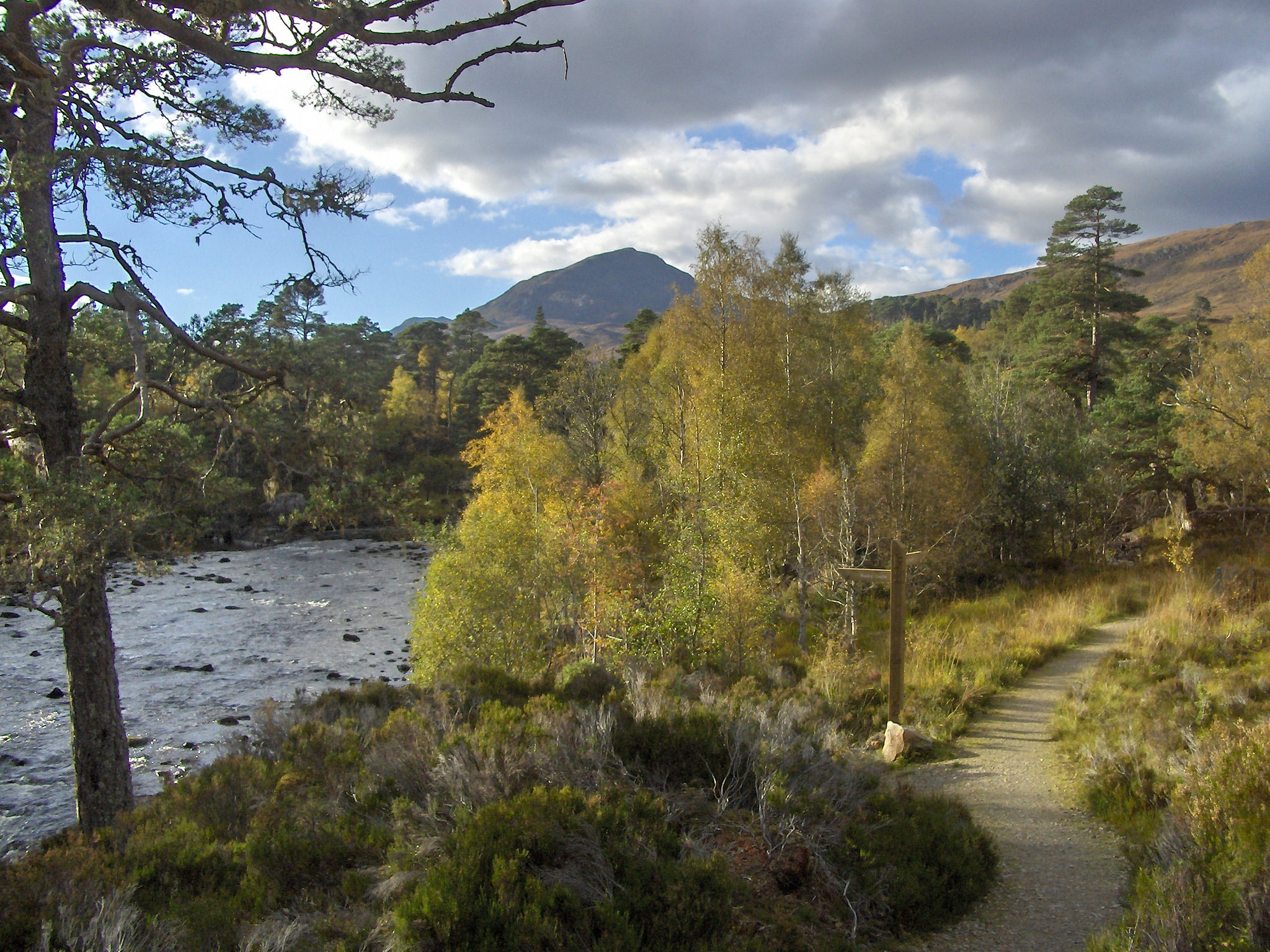 Your very own driver with Drumscot Scottish Tours knows the most idyllic routes for Glen Affric in the north; include it on your tour!