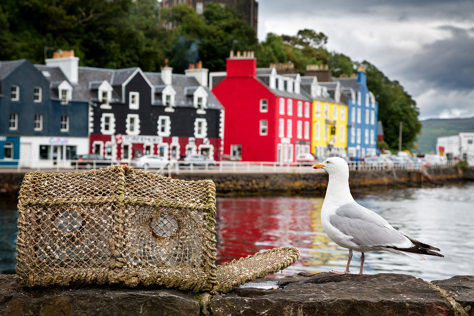 Explore Tobermory on the Isle of Mull on your private tour of Scotland