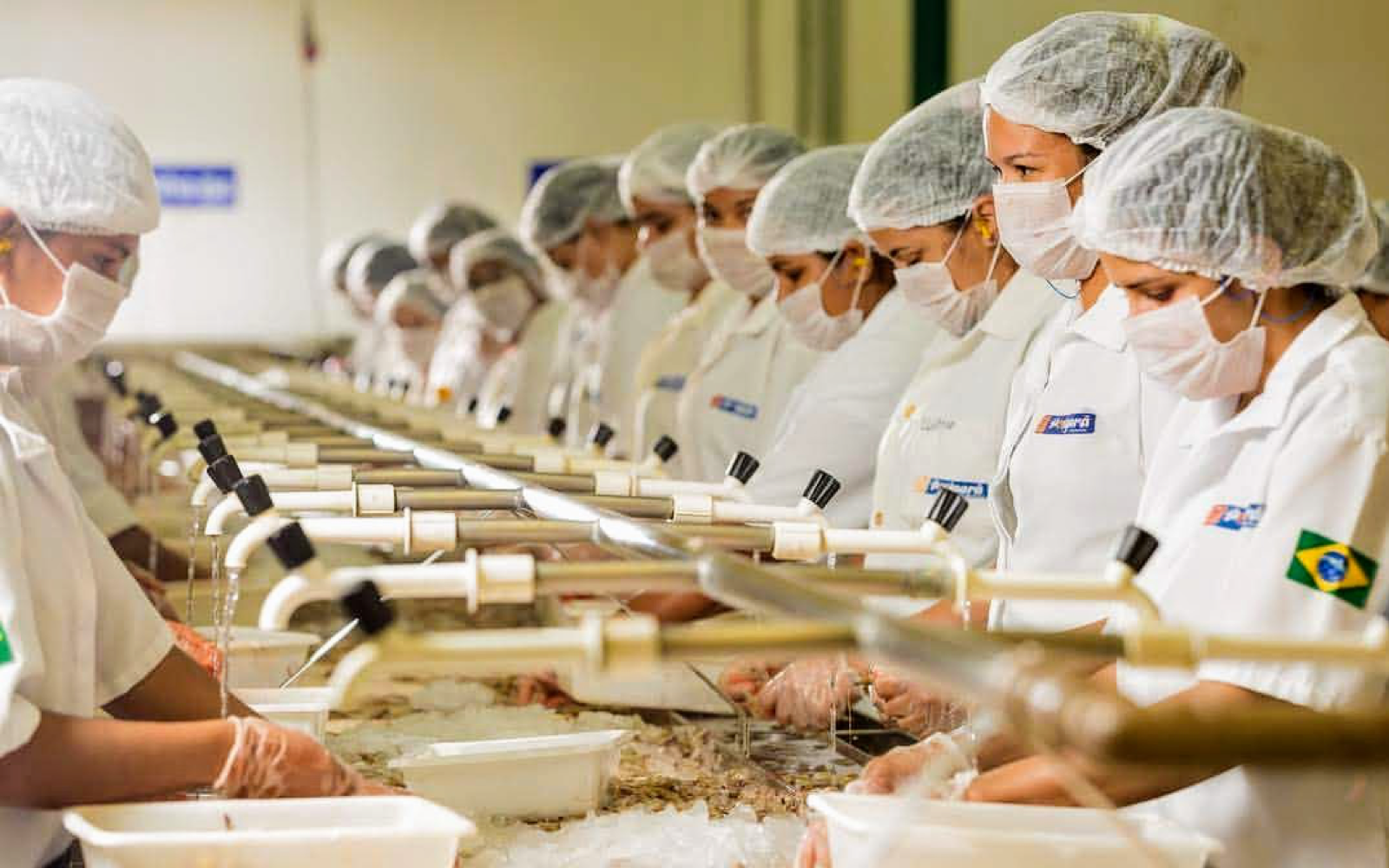 Shrimp-processing