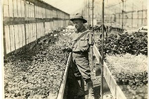 Gardening as Occupational Therapy During WWI