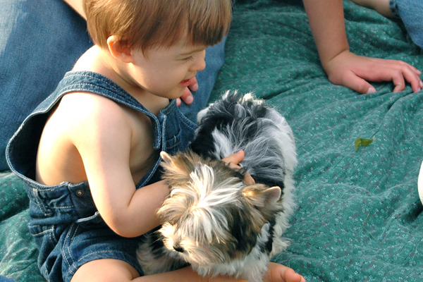 child playing with a yorkie puppy