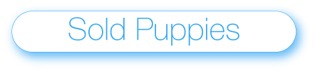 sold puppies button