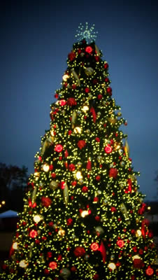 Commercial Christmas Tree Lighting