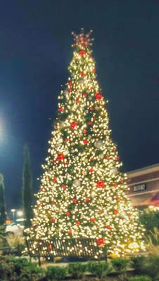 Commercial Christmas Lighting for Trees