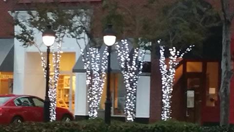 Pavilion Christmas Tree Lighting