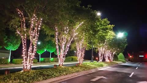 Pavilion Holiday Tree Lighting