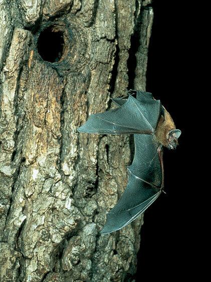 Fledermäuse auf Gut Hügle Erlebnishof