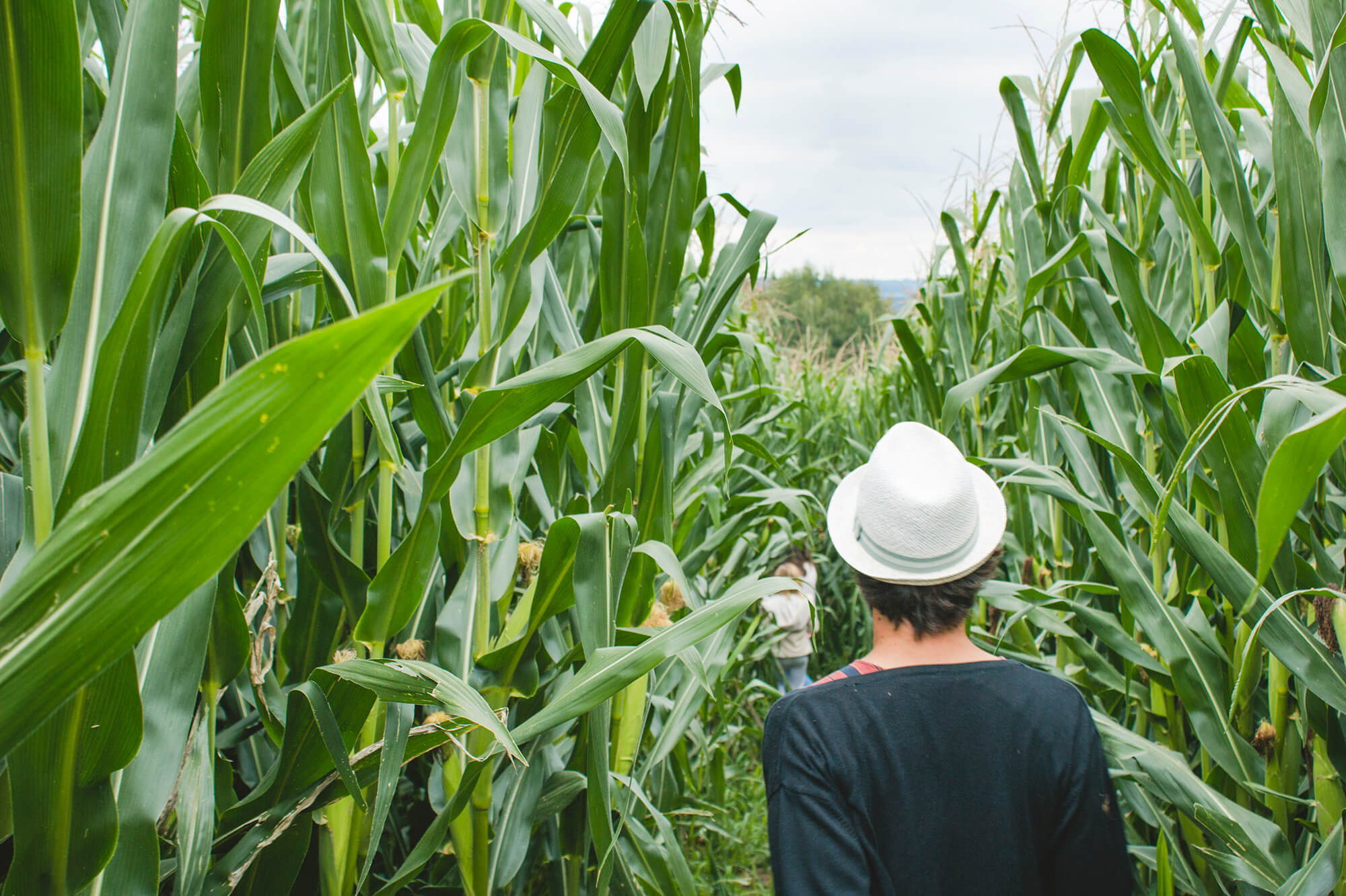 Maislabyrinth 2019 Gut Hügle Erlebnisbauernhof