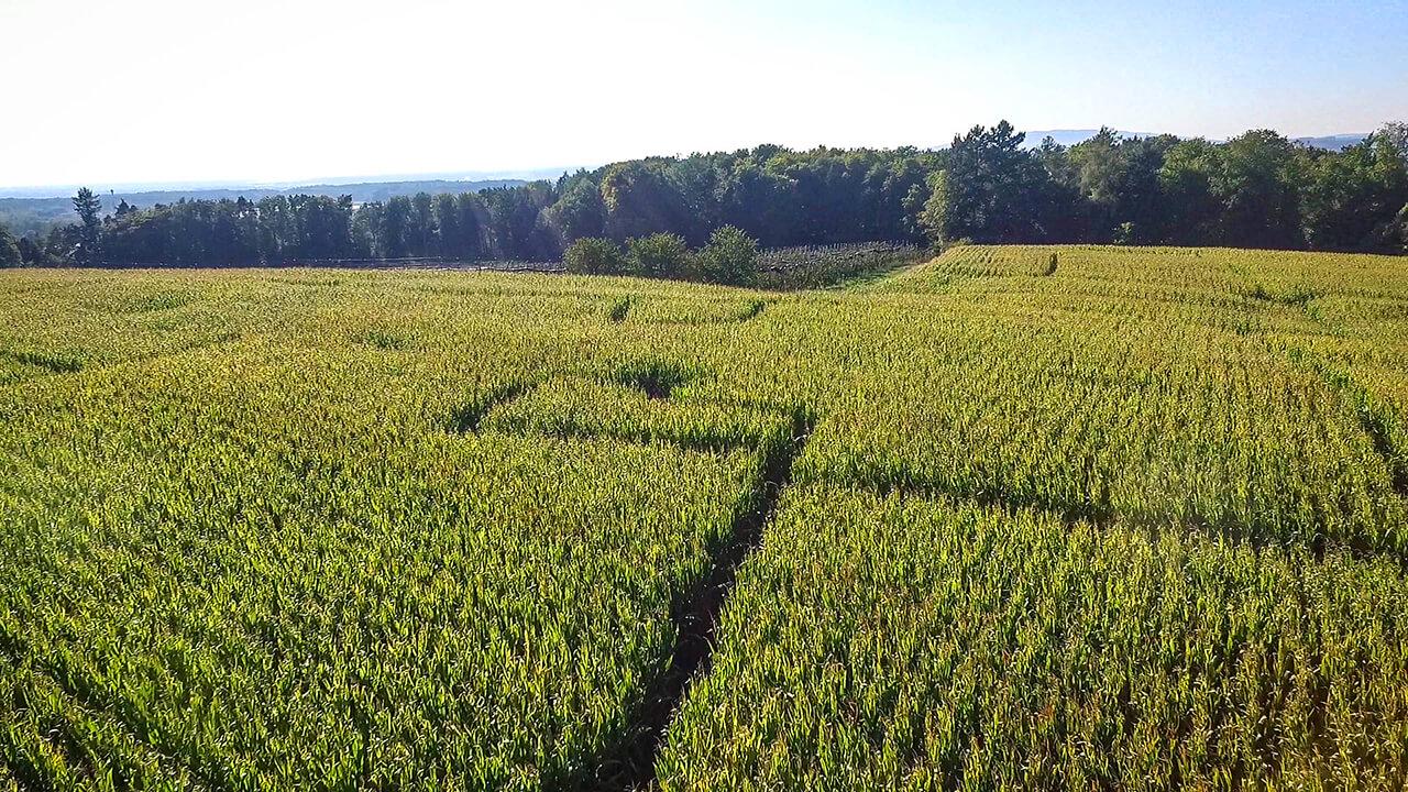 Maislabyrinth in Ravensburg von oben, auf Gut Hügle dem Erlebnishof