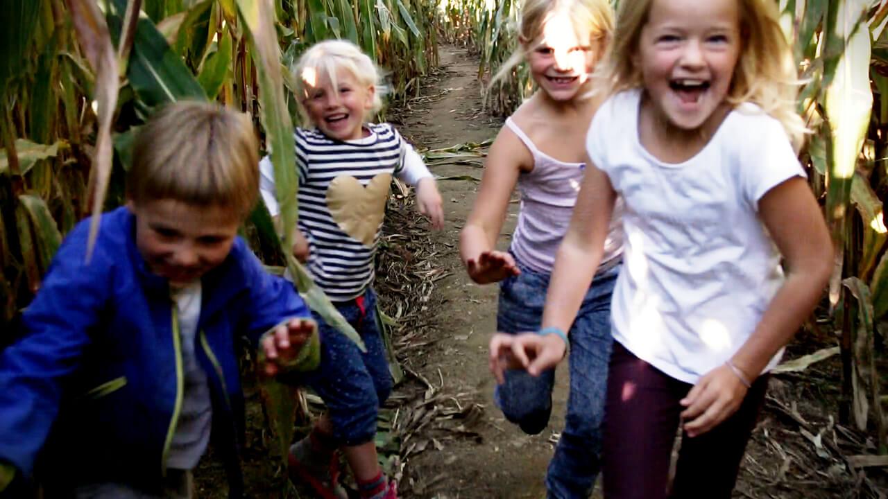 Kinder im Maislabyrinth in Ravensburg, auf Gut Hügle dem Erlebnishof