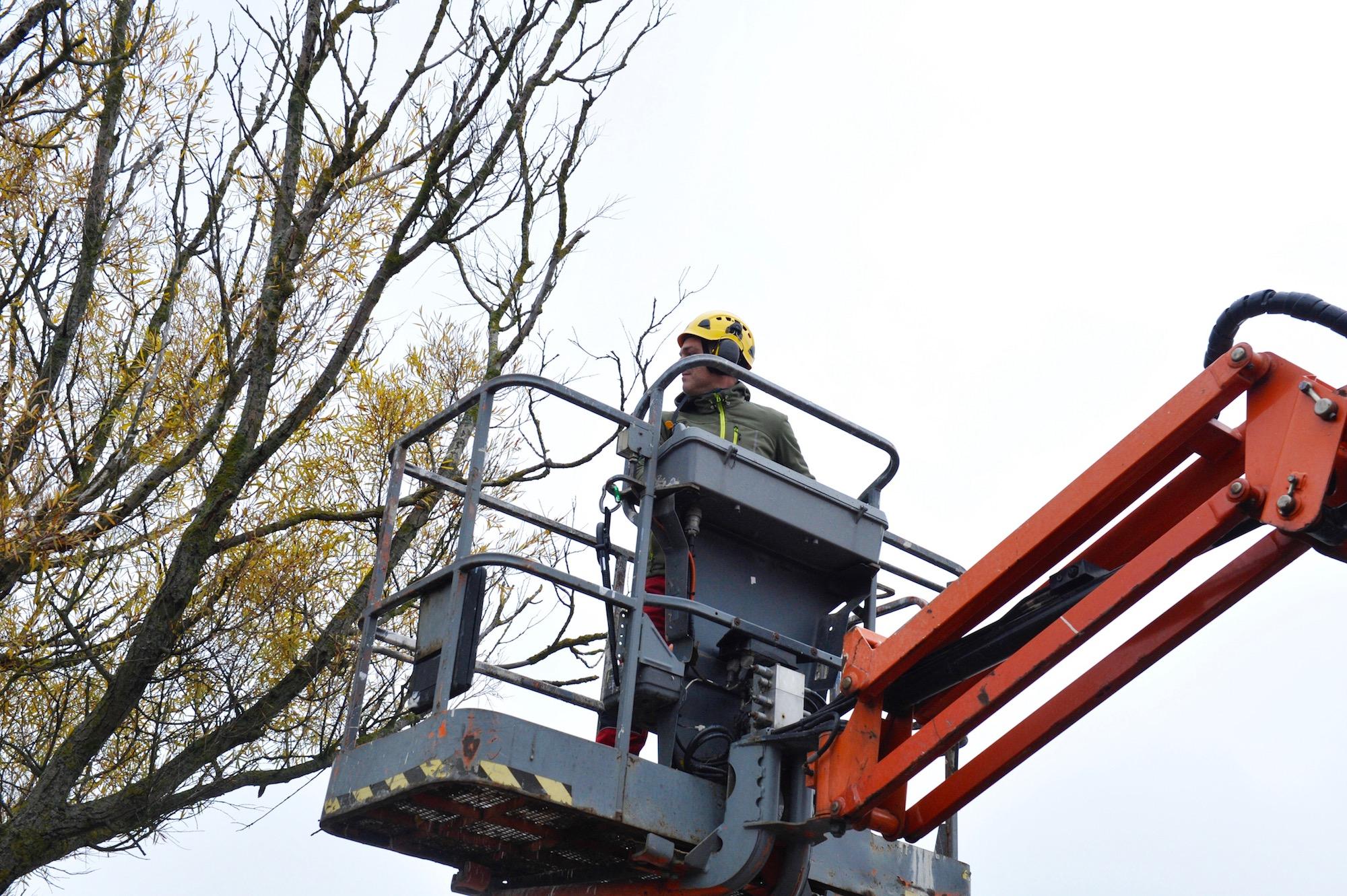 Gemeente Den Helder zorgt vakkundig voor haar bomenpopulatie