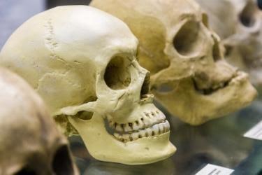 Museum of Death - Skulls