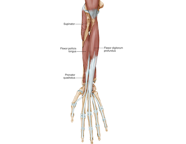 Elbow Arm