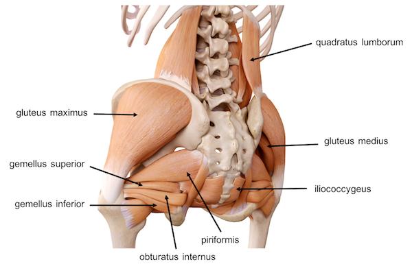 Pelvis Hip