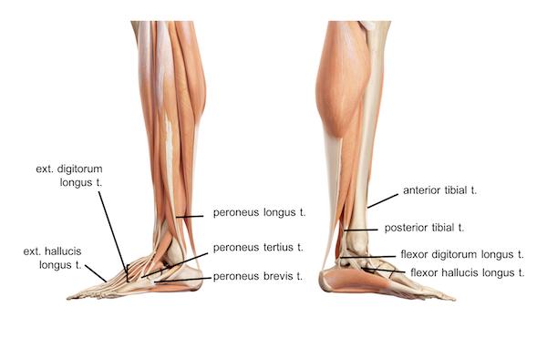 Leg Knee