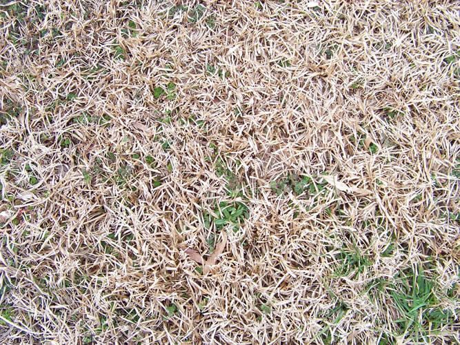 maintain grass in extreme temps