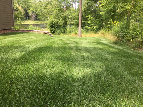 Lawn fertilizing and weed control JLC