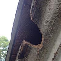 Squirrels Control in Rhode island