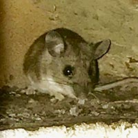 Mouse Control in Rhode island