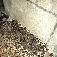 Rhode Island Guano Cleaning and Sanitizing