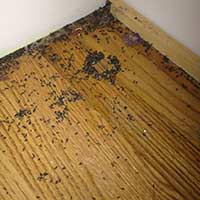 Feces and Urine kitchen cleaning