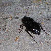 RI Cockroach Inspection