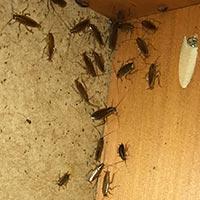 Rhode Island Cockroach Elimination