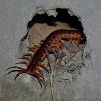 RI Centipede Exterminator