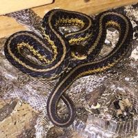 Rhode Island Snake Exterminator