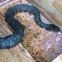 RI Snake Exterminator