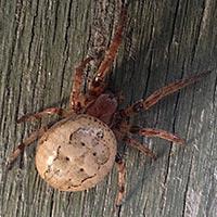 Rhode Island Poisonous Spider Control