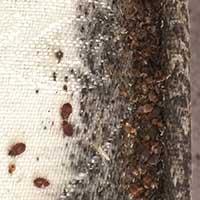 RI Bed Bug Exterminator