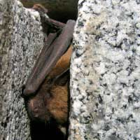 Bat Inspection in Rhode island