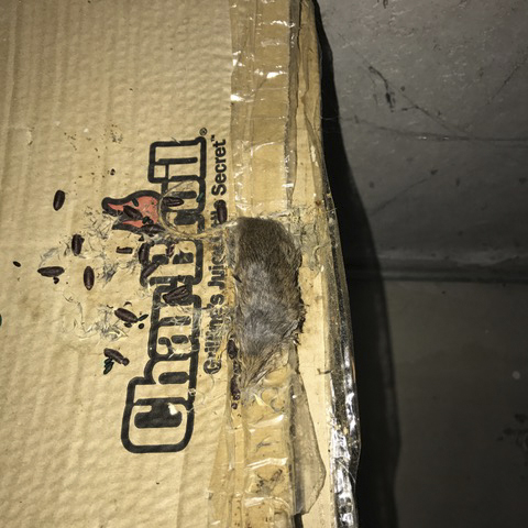 RI Mouse Exclusion and Feces Cleaning