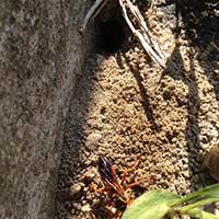 Rhode Island Digger Bee Control