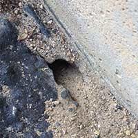 RI Digger Bee Control